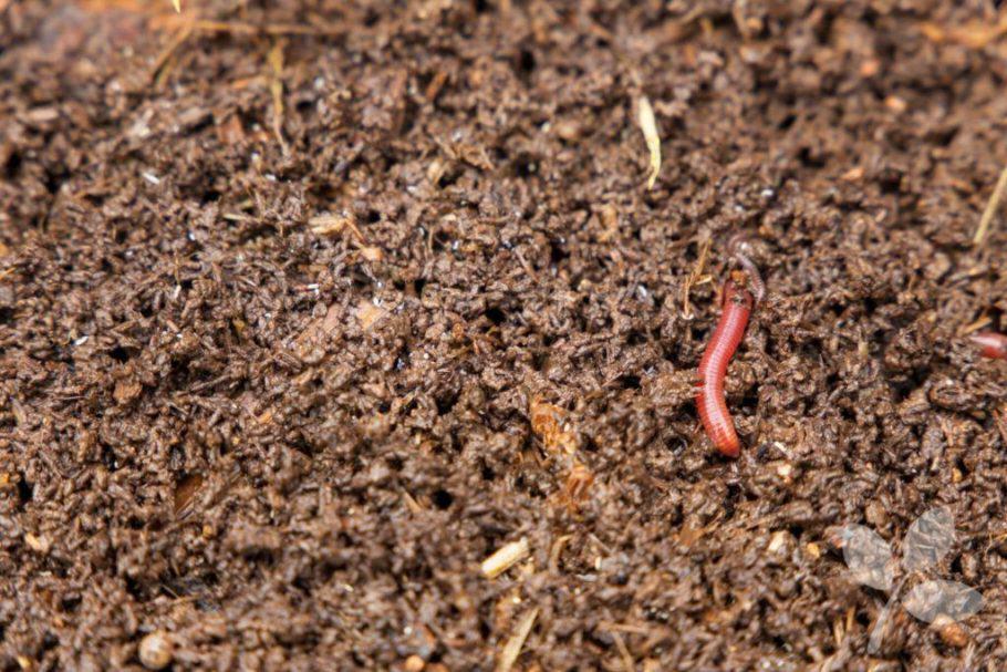 Organismes i microorganismes descomponen la matèria orgànica del sòl