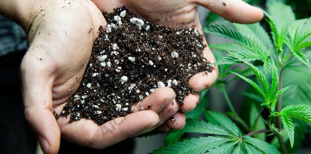 Substrat de terra per a cànnabis