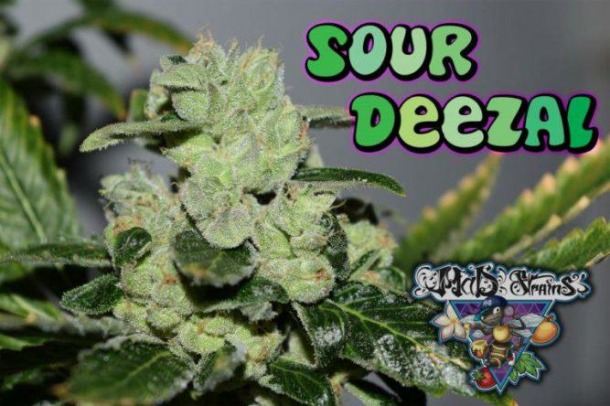 Sour Deezal de MaD Strains