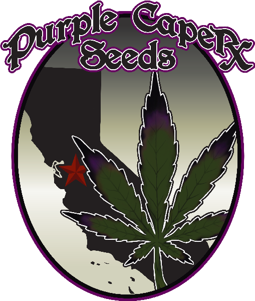 Purple Caper Seeds
