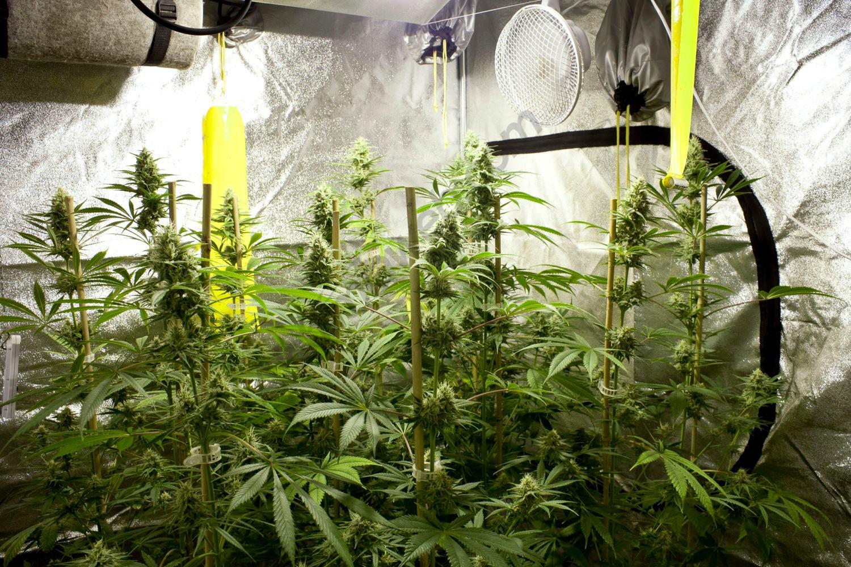 La climatització d'un armari de cultiu es molt important per a crear un ambient propici per al desenvolupament de les plantes