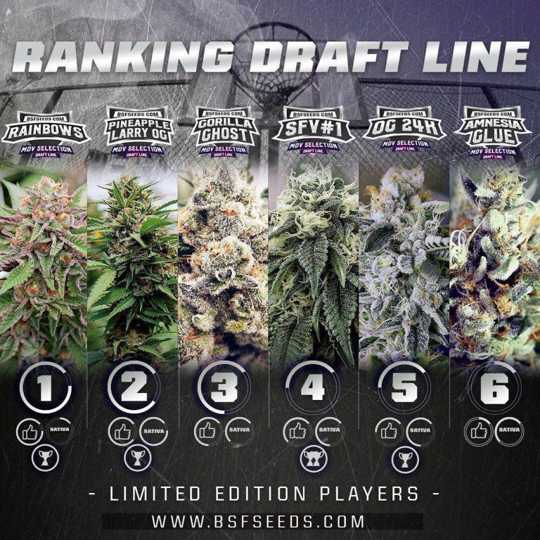 Rànquing actual del Draft Line de BSF Seeds (2018)
