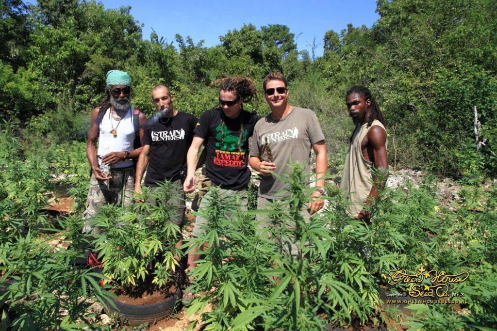 Strain Hunters visitant un cultiu de marihuana a Jamaica