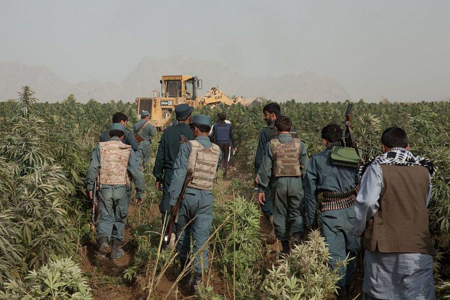 Afganistan és el major productor mundial d'haixix