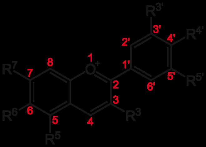 Estructura bàsica de les antocianines, un tipus de flavonoide