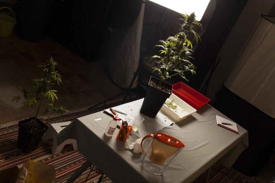 Tot a punt per collir i manicurar les plantes