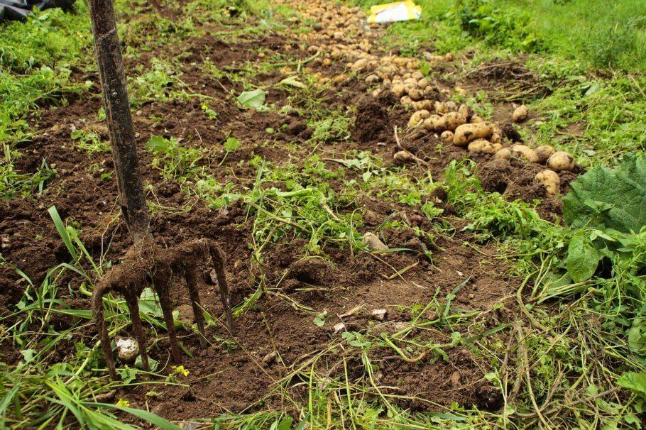 El Bokashi propicia sòls sans, vius i fèrtils
