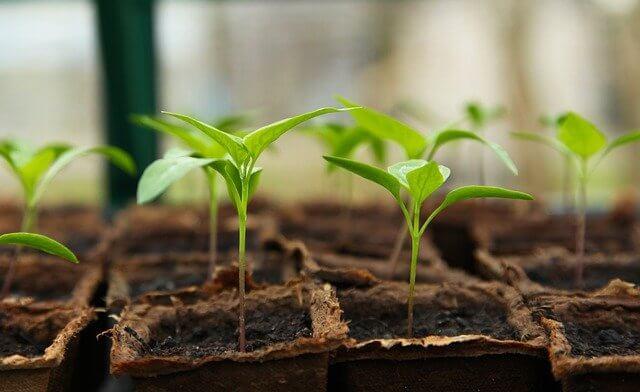 Trucs per germinar les teves llavors d'horta
