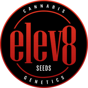 Elev8 Seeds, varietats de cànnabis de qualitat top