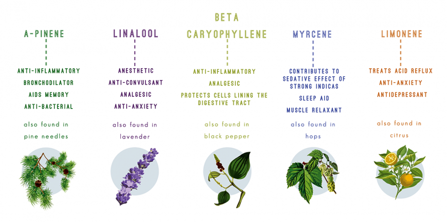 Terpenes and marijuana