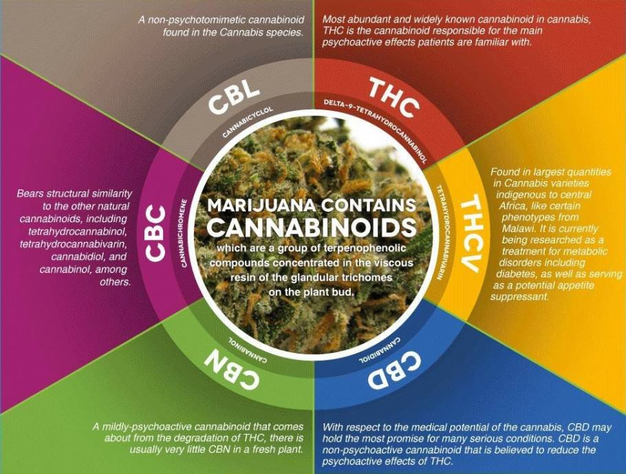 The main cannabinoids of marijuana