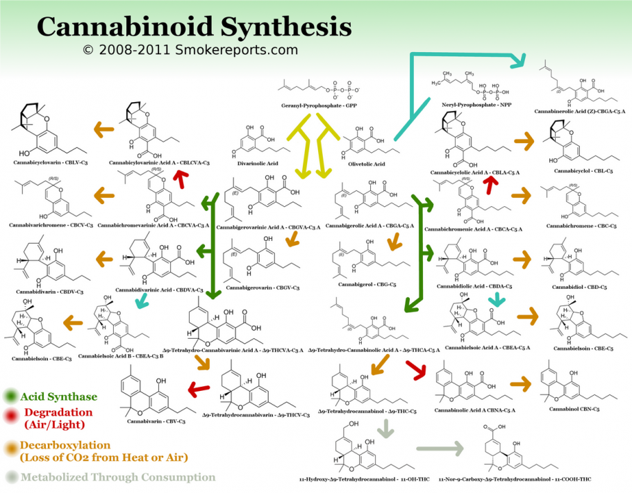 Cannabinoids and their medicinal properties - Alchimia blog