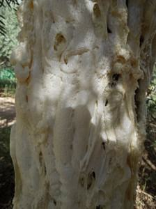 Tree trunk with polyurethane foam