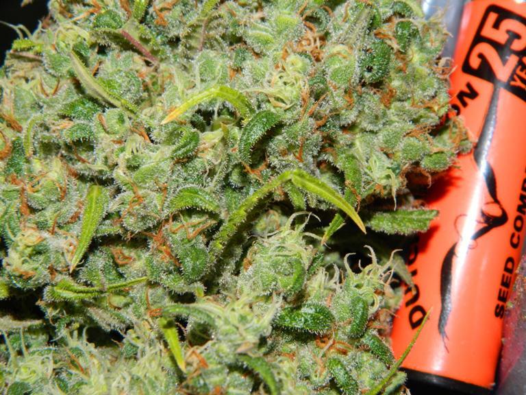 Orange Bud close-up view