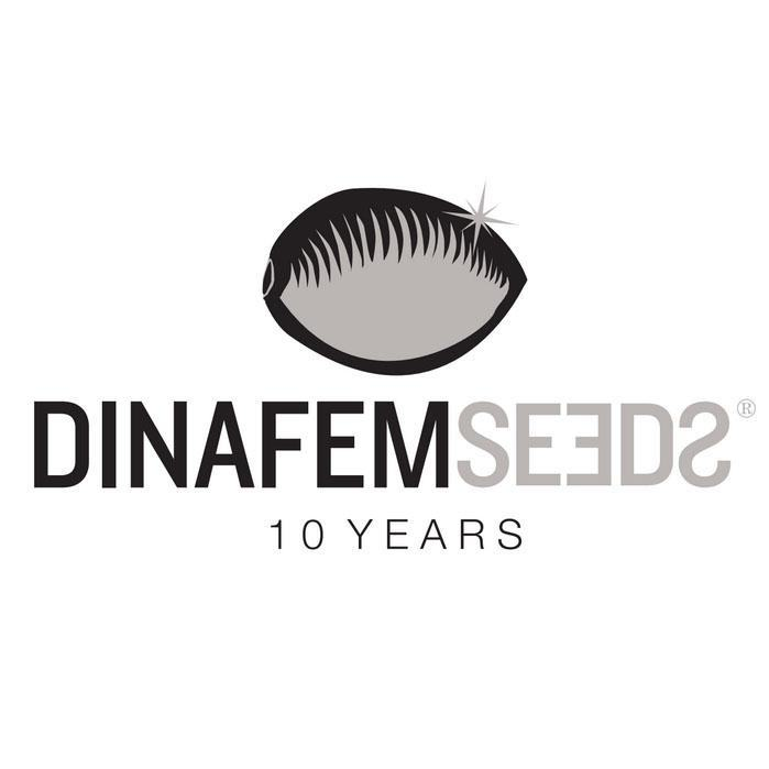 10th anniversary of Dinafem