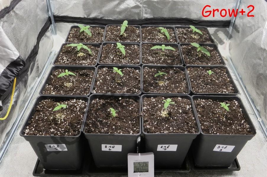 Seedlings beginning their life