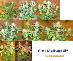 818 Headband from The Cali Connection