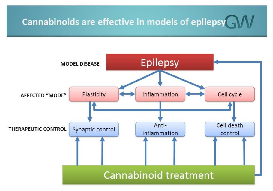 GW Pharmaceuticals studies the role of CBD against epilepsy