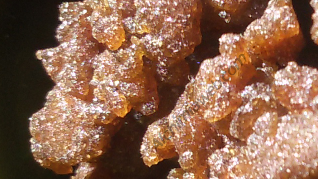 Fresh frozen cannabis concentrate