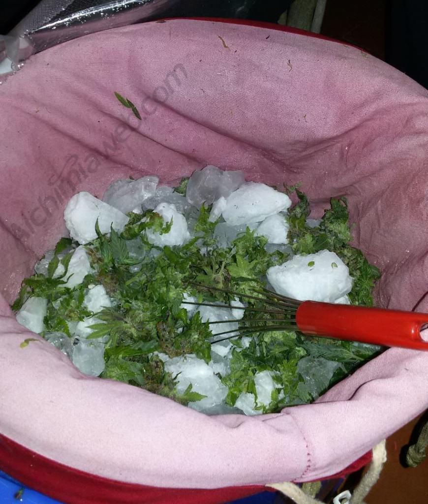 Fresh Frozen cannabis extractions - Alchimia blog