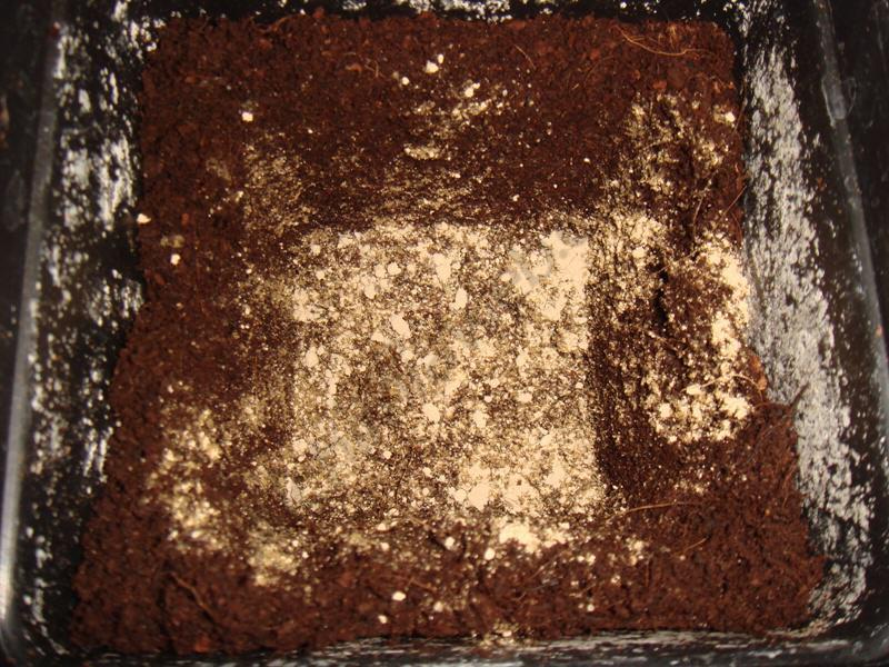 Botanicare ZHO Inoculant promotes root growth