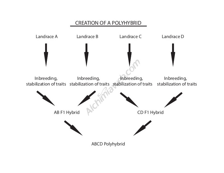 How to create a polyhybrid