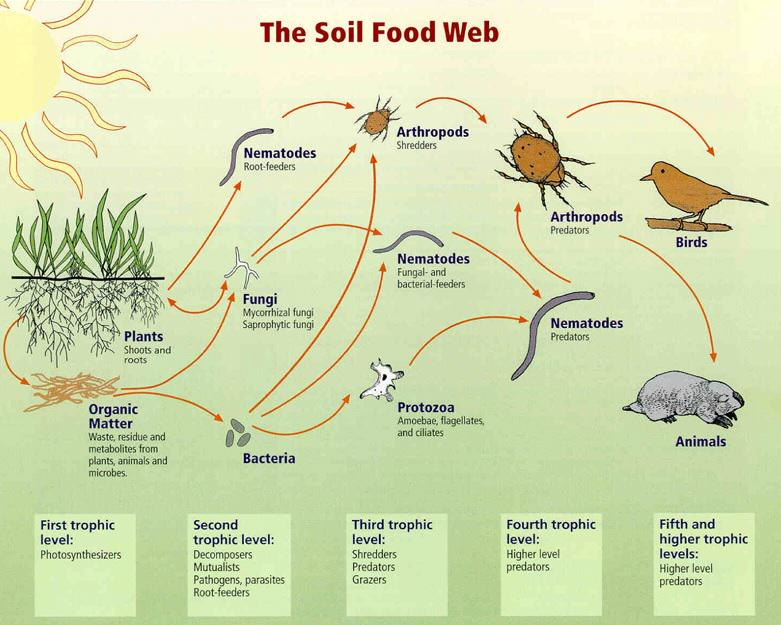 Soil Food Web Gardening