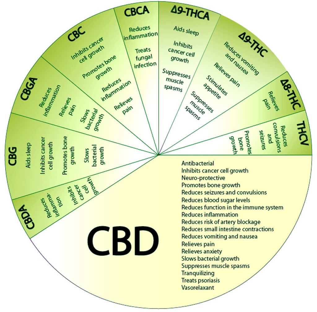 CBD, the cannabinoid with the most therapeutical properties