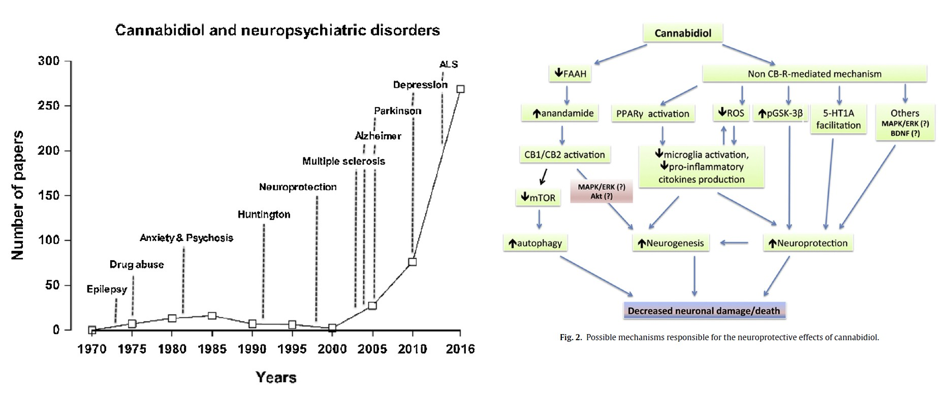 CBD and neurological conditions