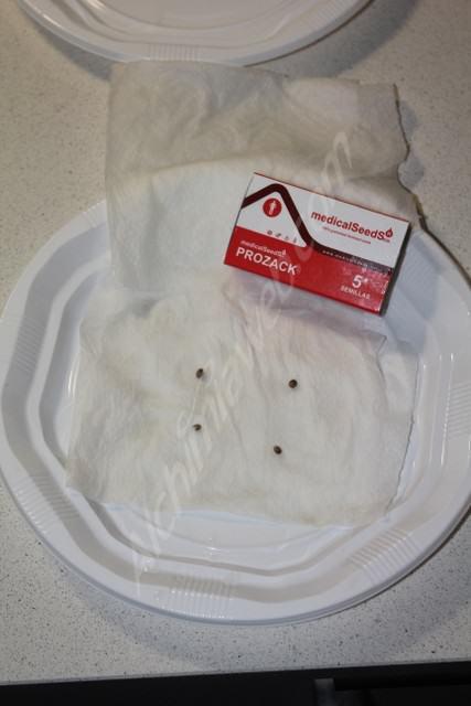 Prozack seeds germinating