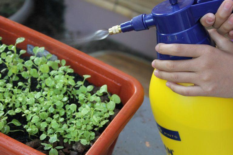 Foliar spraying and cannabis
