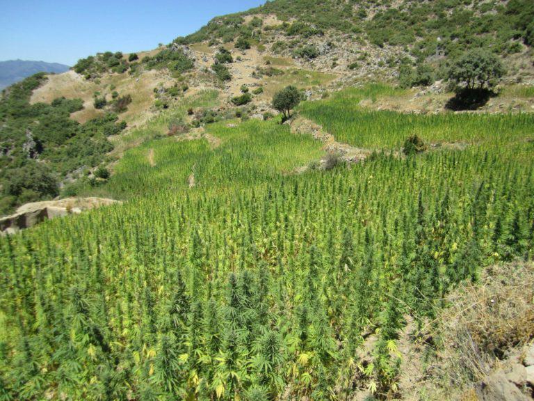 Marijuana in Morocco