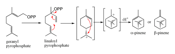 Synthesis of pinene from geranyl pyrophosphate