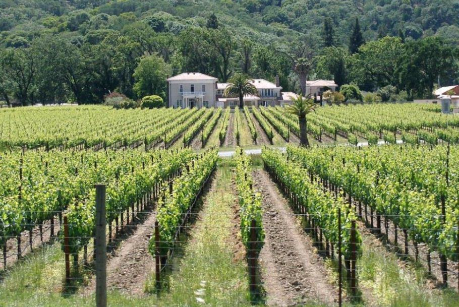 The Emerald Triangle has its fair share of vineyards