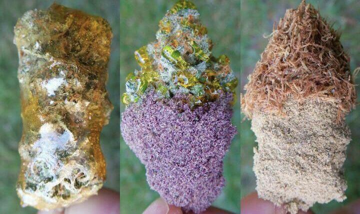 Caviar Gold or Moon Rocks
