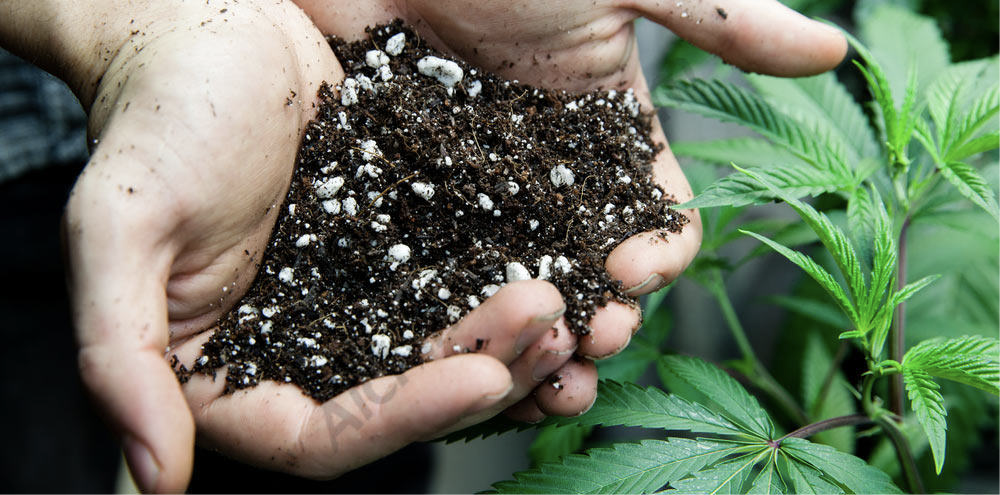 Cannabis specific soil