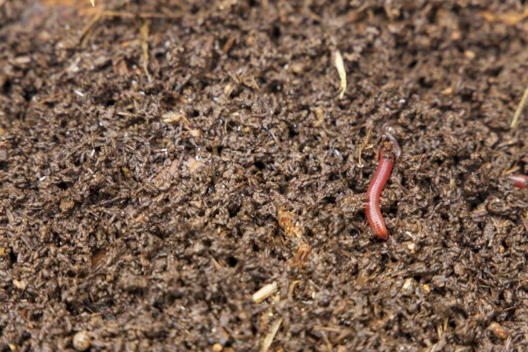Microbes and microorganisms in soil decompose organic matter