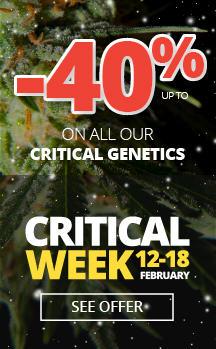 Critical Week