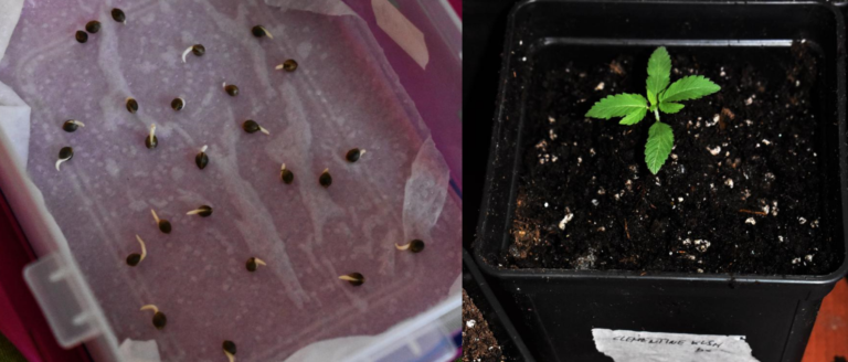 Excellent germination ratio and proper growth