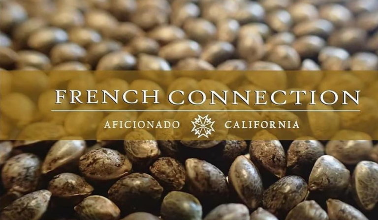 Aficionado French Connection, top class genetics arriving in Europe