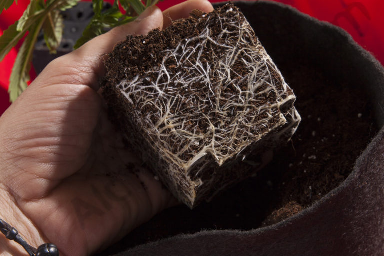 With the right products you will get an impressive root growth
