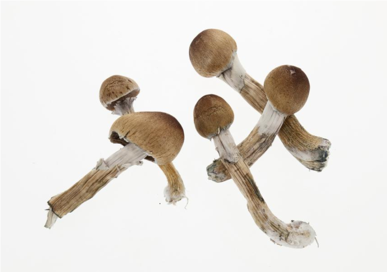 Introduction to microdosing psilocybin