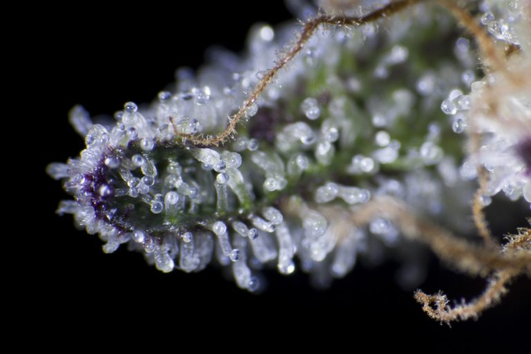 There are different ways to increase the production of trichomes