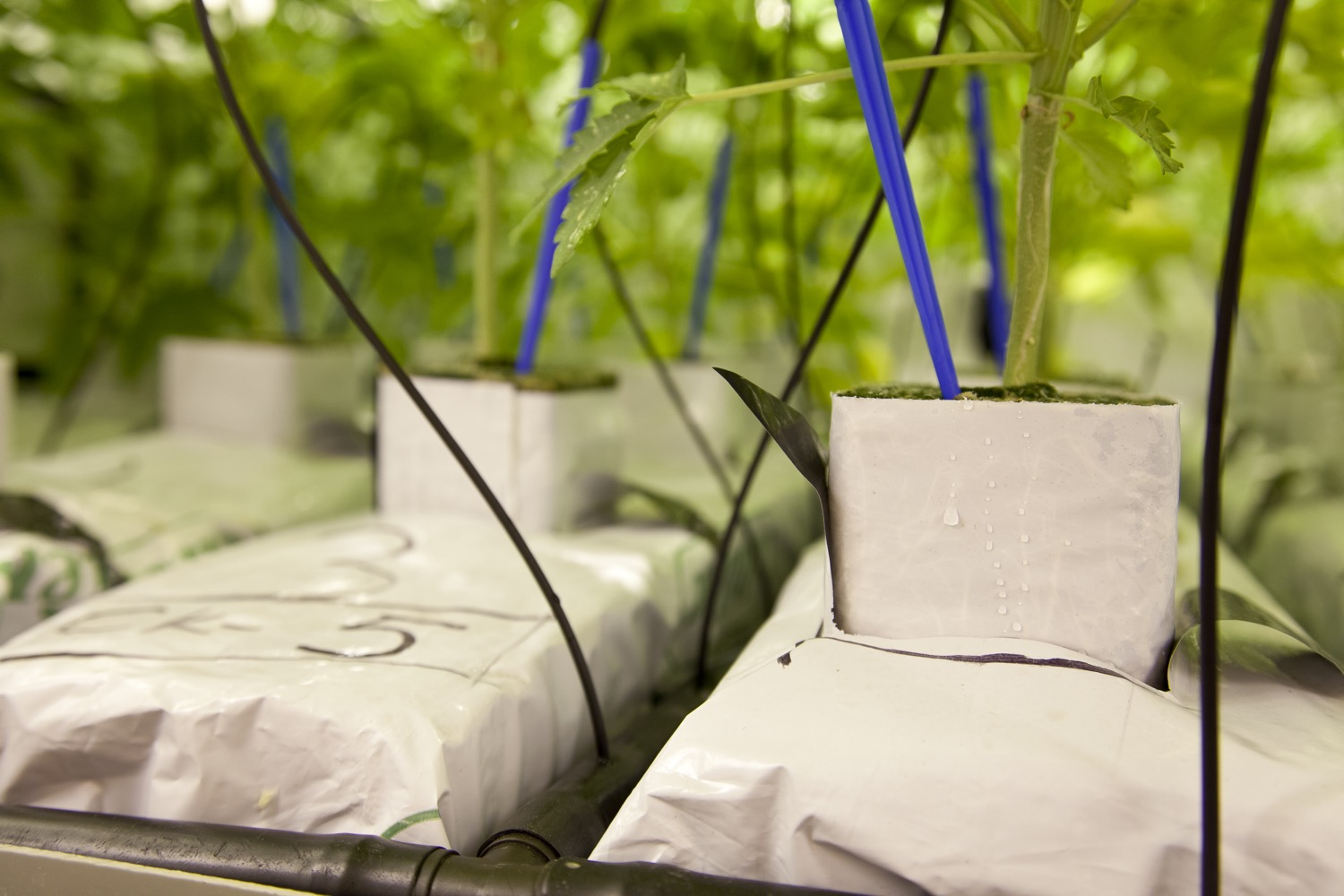 Hydroponic systems require regular cleaning