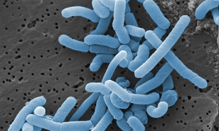 Lactobacillus play an important role in Bokashi preparation