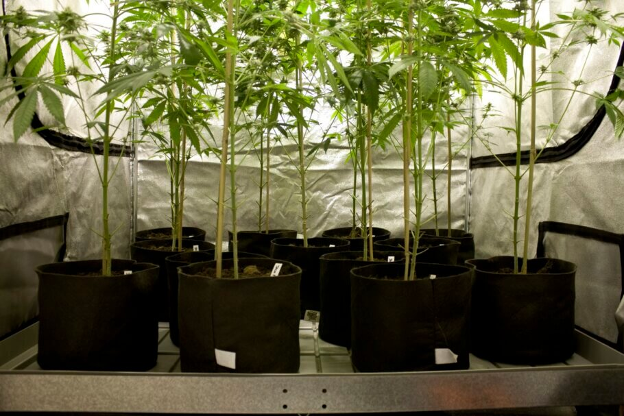 Depending on the cultivation method, you can choose a different type of container