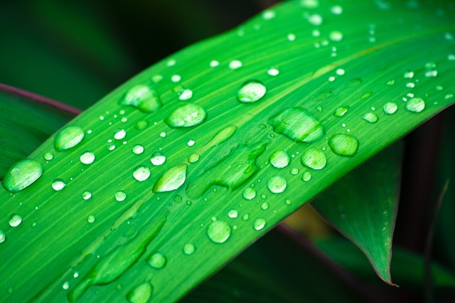 The adequate relative humidity is essential for plants