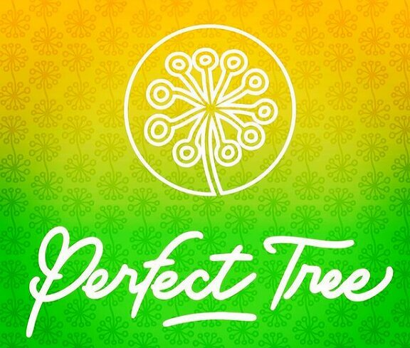 Perfect Tree Seeds - Presentation and interview