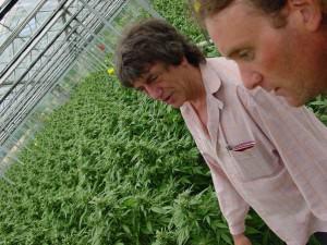 Shantibaba et Howard Marks se sont associés pour créer Mr Nice Seeds