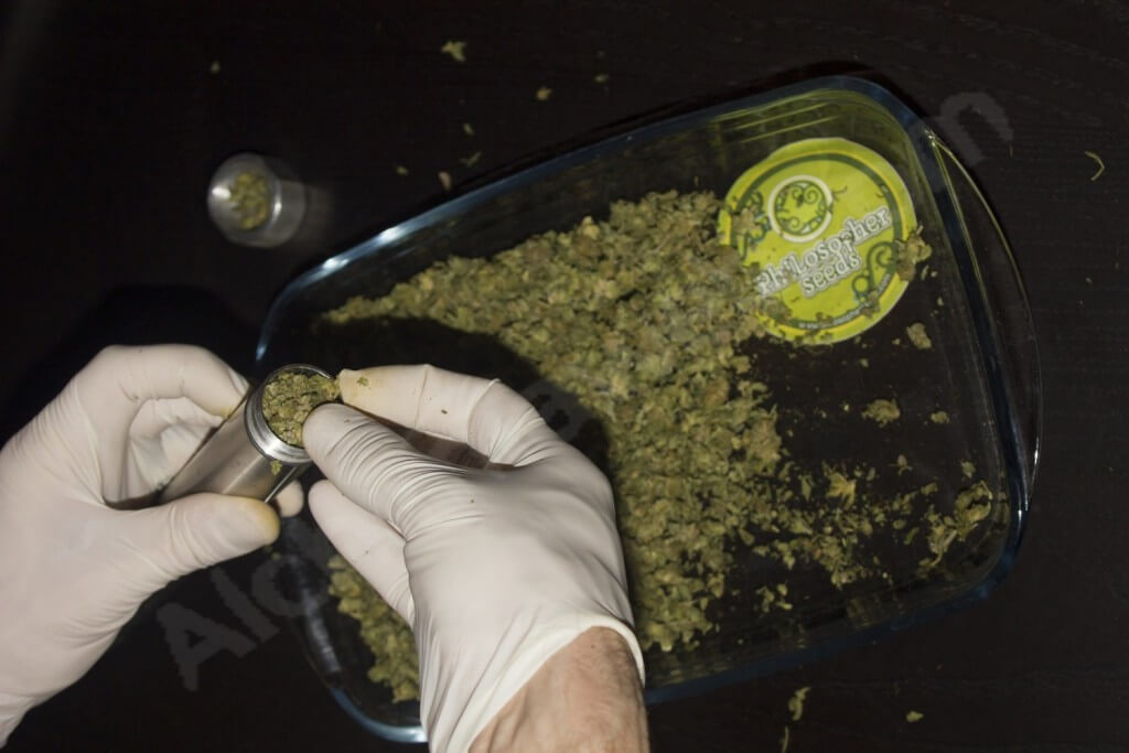 Remplissage des tubes de cannabis pour faire de l'huile BHO
